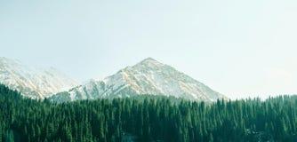 Αιχμή βουνών με το δασικό τονισμό χρώματος πεύκων Στοκ Εικόνες
