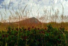 αιχμή βουνών μόλις ορατή πίσω από spikelets της ξηράς χλόης και τα αλσύλλια rhododendron στο πρώτο πλάνο στοκ εικόνες με δικαίωμα ελεύθερης χρήσης