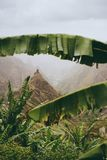 Αιχμή βουνών της κοιλάδας Xo-xo ορατή σε όλο το πλαίσιο φύλλων μπανανών κάτω από την κοιλάδα Μια από την καλύτερη διαδρομή οδοιπο Στοκ φωτογραφία με δικαίωμα ελεύθερης χρήσης