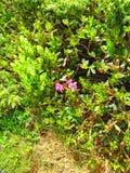 Αιχμή mountin †«Gropsoarele Ciucas στην κορυφογραμμή 203 Gropsoarele †«Zaganu Στοκ Εικόνες