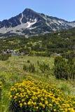 Αιχμή Sivrya και λουλούδια, βουνό Pirin Στοκ Φωτογραφία