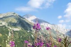 Αιχμή Vihren στο βουνό Pirin, Βουλγαρία Στοκ φωτογραφίες με δικαίωμα ελεύθερης χρήσης