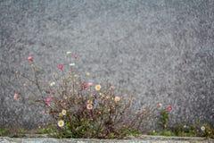 αιχμαλωσία Στοκ εικόνες με δικαίωμα ελεύθερης χρήσης