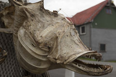 Αιχμηρά δόντια Στοκ φωτογραφίες με δικαίωμα ελεύθερης χρήσης