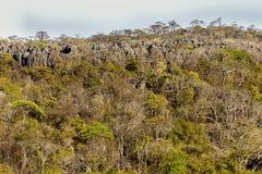 Αιχμηρό ασβεστόλιθων σχηματισμών nasharp ασβεστόλιθων πάρκο Ankaran Madagasakr Ankarana Madagaskartional πάρκων σχηματισμών εθνικ Στοκ εικόνα με δικαίωμα ελεύθερης χρήσης