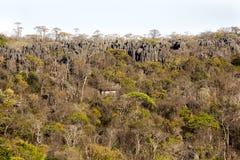 Αιχμηρό ασβεστόλιθων σχηματισμών nasharp ασβεστόλιθων πάρκο Ankaran Madagasakr Ankarana Madagaskartional πάρκων σχηματισμών εθνικ Στοκ Φωτογραφίες