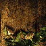 Αιώνια ρομαντική κάρτα λουλουδιών αμπέλων Στοκ Εικόνες