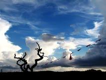 Αιώνιος ο αποβαλλόμενος δέντρων, κάτω από το μαζικό σύννεφο και το μπλε ουρανό στοκ φωτογραφίες με δικαίωμα ελεύθερης χρήσης