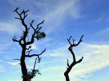 Αιώνιος ο αποβαλλόμενος δέντρων, κάτω από το σύννεφο και το μπλε ουρανό στοκ φωτογραφία