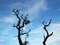 Αιώνιος ο αποβαλλόμενος δέντρων, κάτω από το σύννεφο και το μπλε ουρανό, το βράδυ στοκ φωτογραφίες με δικαίωμα ελεύθερης χρήσης