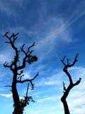 Αιώνιος ο αποβαλλόμενος δέντρων, κάτω από το clould και το μπλε ουρανό στοκ φωτογραφία με δικαίωμα ελεύθερης χρήσης