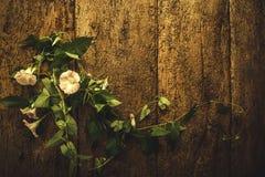 Αιώνιο ρομαντικό υπόβαθρο λουλουδιών αμπέλων Στοκ Φωτογραφία