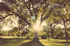 αιώρα κήπων Στοκ φωτογραφία με δικαίωμα ελεύθερης χρήσης