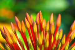 Ακίδα λουλουδιών Στοκ Φωτογραφίες