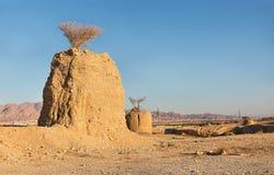 Ακακία στους πόλους στην έρημο Στοκ Εικόνα