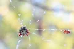 Ακανθωτή αράχνη στοκ φωτογραφία