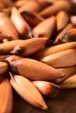 Ακατέργαστα εδώδιμα της Χιλής καρύδια πεύκων Pinones Στοκ εικόνες με δικαίωμα ελεύθερης χρήσης