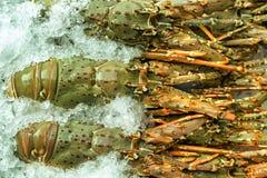 Ακατέργαστα θαλασσινά αστακών στον πάγο Στοκ Εικόνες