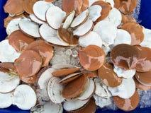 Ακατέργαστα θαλασσινά μυδιών Στοκ Φωτογραφίες