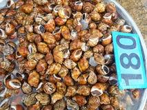 Ακατέργαστα θαλασσινά μυδιών Στοκ φωτογραφία με δικαίωμα ελεύθερης χρήσης