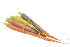 Ακατέργαστα καρότα με τα διαφορετικά χρώματα Στοκ Φωτογραφία