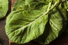 Ακατέργαστα οργανικά πράσινα πράσινα λάχανων Στοκ Εικόνες