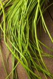 Ακατέργαστα οργανικά πράσινα φρέσκα κρεμμύδια Στοκ Φωτογραφίες