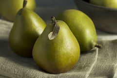 Ακατέργαστα πράσινα οργανικά αχλάδια Seckel Στοκ Εικόνες