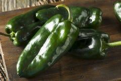 Ακατέργαστα πράσινα οργανικά πιπέρια Poblano Στοκ εικόνες με δικαίωμα ελεύθερης χρήσης