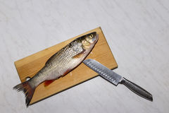 Ακατέργαστα του γλυκού νερού ψάρια στον πίνακα κουζινών, χέρι, μαχαίρι, κλίμακες, πτερύγια, Στοκ Φωτογραφίες