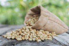 Ακατέργαστα φασόλια καφέ στο πράσινο θολωμένο υπόβαθρο Φασόλι καφέ εστίασης Στοκ Εικόνα