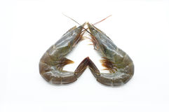 Ακατέργαστα/φρέσκα γαρίδες/γαρίδα/θαλασσινά Στοκ Φωτογραφίες