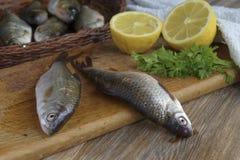 Ακατέργαστα φρέσκα ψάρια ποταμών Στοκ Εικόνες
