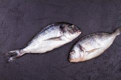Ακατέργαστα φρέσκα ψάρια dorado Στοκ Εικόνα