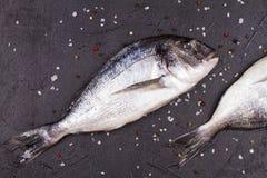 Ακατέργαστα φρέσκα ψάρια dorado Στοκ Εικόνες