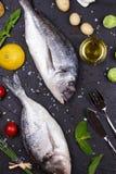 Ακατέργαστα φρέσκα ψάρια dorado Στοκ εικόνες με δικαίωμα ελεύθερης χρήσης
