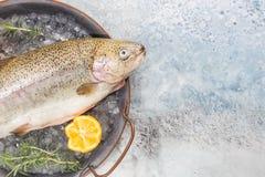 Ακατέργαστα ψάρια πεστροφών στοκ εικόνες