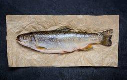 Ακατέργαστα ψάρια πεστροφών Στοκ Φωτογραφία