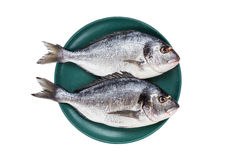 Ακατέργαστα ψάρια dorado στο πράσινο πιάτο που απομονώνεται πέρα από το άσπρο υπόβαθρο Τοπ όψη Στοκ Εικόνα
