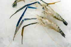 Ακατέργαστες γαρίδες στον πάγο Στοκ Εικόνα