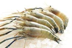 Ακατέργαστες γαρίδες Στοκ Εικόνα