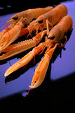 ακατέργαστες γαρίδες Στοκ Φωτογραφίες