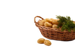 Ακατέργαστες πατάτες μωρών Στοκ φωτογραφίες με δικαίωμα ελεύθερης χρήσης