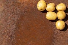 Ακατέργαστες πατάτες ως νέα συγκομιδή στη σκουριασμένη επιφάνεια μετάλλων ως υπόβαθρο στοκ φωτογραφίες με δικαίωμα ελεύθερης χρήσης