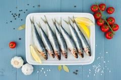 Ακατέργαστες φρέσκες σαρδέλλες στο άσπρο πιάτο με τον πάγο και άλλο ingredi Στοκ Φωτογραφία