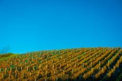 Ακατέργαστη κάθετη πανοραμική άποψη αμπελώνων σχετικά με το νησί Waiheke, Ώκλαντ, Νέα Ζηλανδία σε έναν όμορφο μπλε ουρανό Στοκ φωτογραφία με δικαίωμα ελεύθερης χρήσης