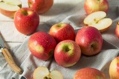 Ακατέργαστη κόκκινη οργανική ρόδινη κυρία Apples Στοκ Εικόνες