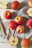 Ακατέργαστη κόκκινη οργανική ρόδινη κυρία Apples Στοκ Φωτογραφία