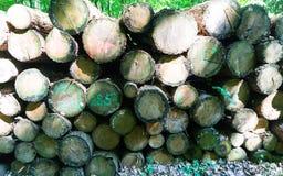 Ακατέργαστη ξυλεία Στοκ φωτογραφίες με δικαίωμα ελεύθερης χρήσης