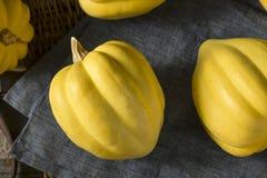 Ακατέργαστη οργανική άσπρη κίτρινη κολοκύνθη βελανιδιών Στοκ Φωτογραφία